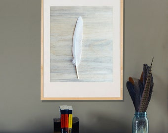 Nature Photography White Feather Wall Art on Blue Pine    Archival Photograph