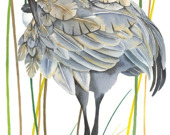 "Limited Edition GICLEE MINI Print /  ""Reed Preening"" /  Watercolor Painting of a Sandhill Crane"