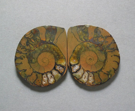 cabochons fossil AMMONITE matching pair two 37X45mm designer cab organic designs