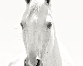 White Horse Photograph, Light Shadows Horse Photograph, White on White Art, Monochromatic Black and White Animal photograph