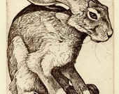 "Nicholas Wilson etching of Jackrabbit ""INSIDE THE BOX"""