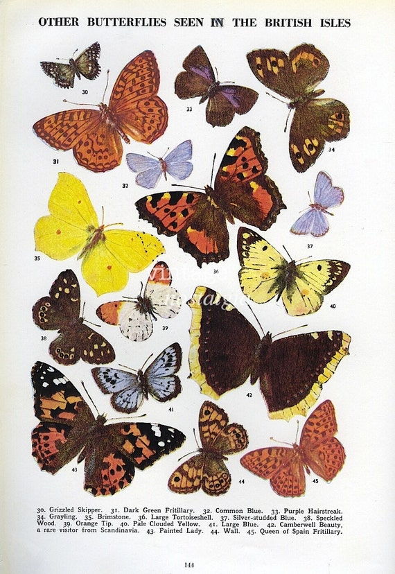 Butterfly print vintage butterfly art plate natural history decor