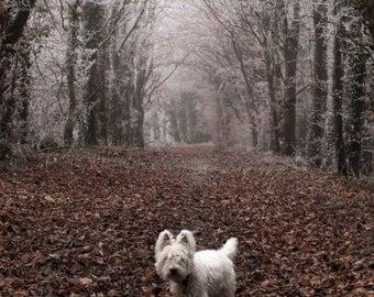 I am Crumpet 9 - Dog Photography - Westie - West Highland terrier - Wall Décor