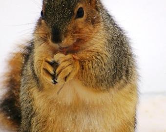 Winter Treats for Fat Squirrel at Bird Feeder 5x7 Fine Art Photographic Print Gift Under 10