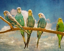 Parakeet Birds perched on a Tree Branch Limb in Retro Style No.432 - A Fine Art Bird Nature Photograph