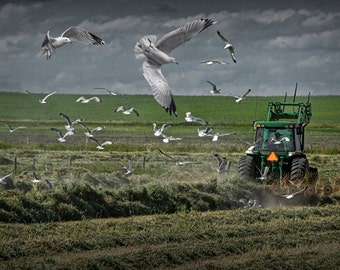 Gull chased Farm Tractor in a Hay Field in Southern Alberta Canada - A Fine Art Agricultural Landscape Photograph