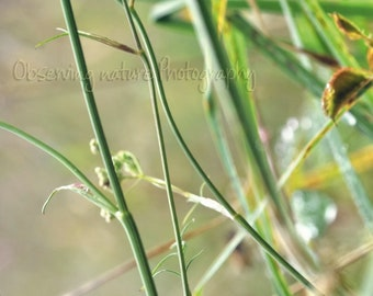 Life in the meadow  Fine Art Photography Download