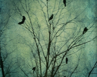 Crow Photograph Tree with Black Birds Nature Surreal Tree Wall Art  Muted Blue The Bewitching Hour 8x12 Photography