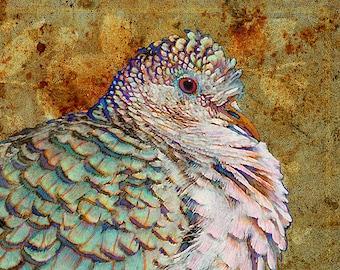 Bird Art Print - Peaceful Dove Art Print - Giclee Art Print Reproduction - Limited Edition  - Bird Print - Bird Art