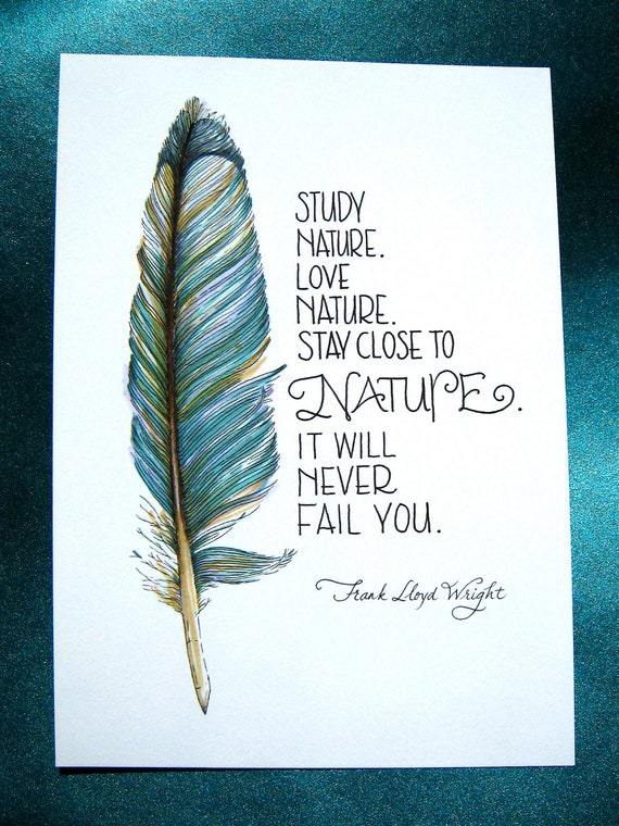 feather art study nature love nature quote frank lloyd