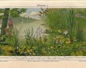 Antique Botanical Print Aquatic Plants  1920s Color Lithograph Water Lilly, Calla, Arrowhead, Water Plants Print Home Decor