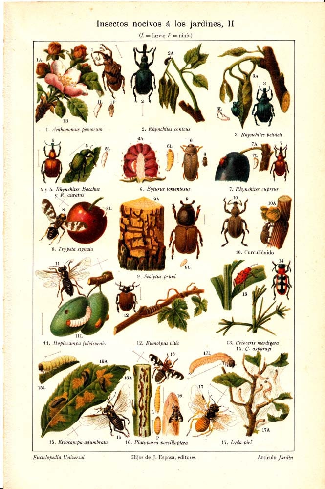1923 Garden Insect Pests Color Lithograph By CarambasVintage
