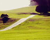 8x10 - Day Tripping - Landscape Photography, Presidio of San Francisco, Green Rolling Hills, Modern Country Decor, Tilt Shift - 9thCycleStudios
