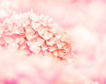 Delicate - Fine art photography of pink hydrangeas, home decor, abstract. Vintage inspired, dreamy, shabby chic, girls room decor.