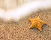 Sea Star Photography, Starfish Photography, Beach sand and waves, Beach Print 8x10 or 8x12, Mothers Day