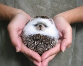 """hedgehog """"lump"""" gift holiday...  I will make this item for your order"""