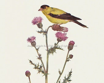 American Goldfinch Bird Fabric Block Repro from Prang 1889 Image