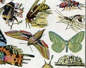 Gorgeous Vintage Insects - Collage Sheet - Art and Craft Projects, Decoupage, Scrapbooking