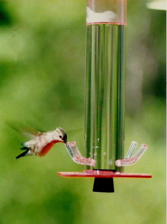 Hummingbird feeder hb 1 by peter 39 s feeders the by for Unique homemade bird feeders