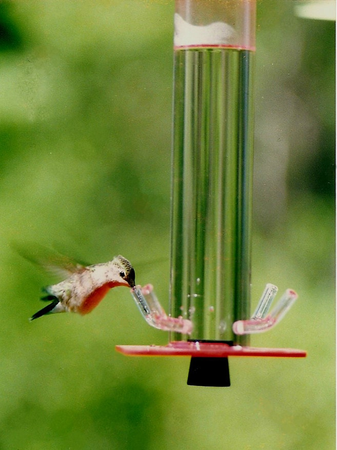 Hummingbird Feeder HB-1 by Peter's Feeders: The unique