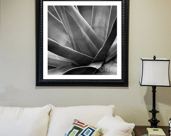 Agave in black and white