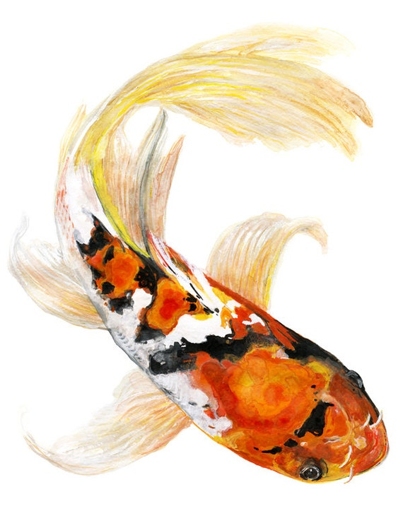 Butterfly koi fish watercolor print signed by artist stephanie for Japanese koi carp paintings