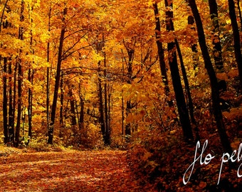 "Fall Photography, Forest Photography, Yellow Leaves, Orange, Nature, Thanksgiving, Autumn, Print, Trees - In the gold forest. 8X12""/16x24"""