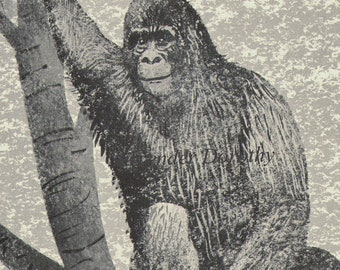Silverback Gorilla Vintage Children's Natural History Lithograph To Frame 1950s Congo Africa