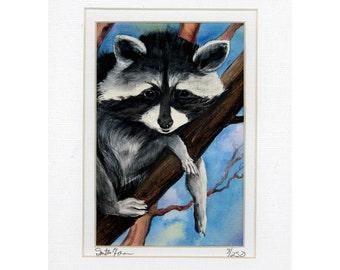 Wonderful Baby Raccoon In a Tree  Print