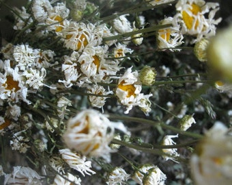 FIELD DAISY  naturally DRiED Herb and Flower Bunches