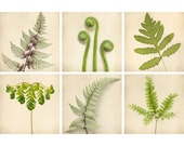 Fern Prints, Botanical Prints, Green Art, Nature Photography Set, Fern Art, Nature Artwork, Fern Wall Art, Photo Set, Set of 6 Prints - RockyTopPrintShop