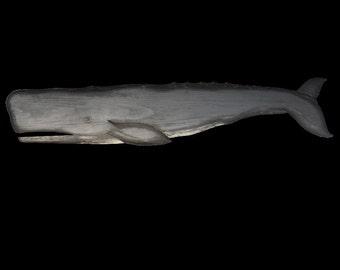 Whales, Sperm Whale Black - 5 ft.