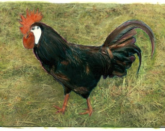 vintage photo Rooster Original hand colored photograph 1978