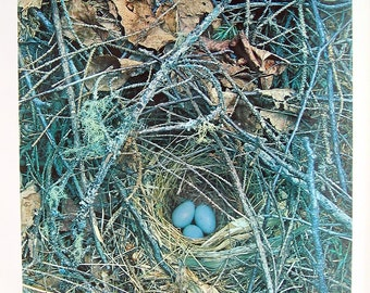 Hermit Thrush Nest - Vintage Colored Photograph - 1966 Book Page