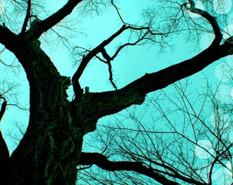 Tree Photography,  Nature Picture, Tree Photo, Aqua, Turquoise, Black, Minimalist, Winter, 5x7 inch Print - An Evening to Dream