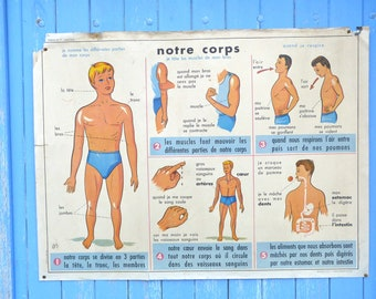 Vintage 1950/50s  French educational chart classroom poster Anatomy bones Body