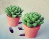 Cactus Soap Set