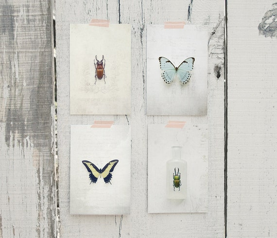 Insect Study 2 Postcard Set
