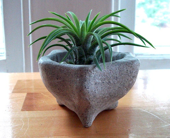 ZEN Mini Concrete Planter with Mexico Air Plant / Home Decor