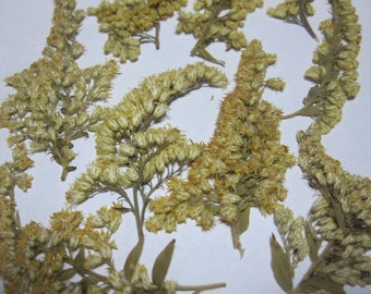 Dried Pressed Flowers for Crafting - Yellow Goldenrod