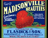 Madisonville Louisianna Strawberries Refrigerator Magnet