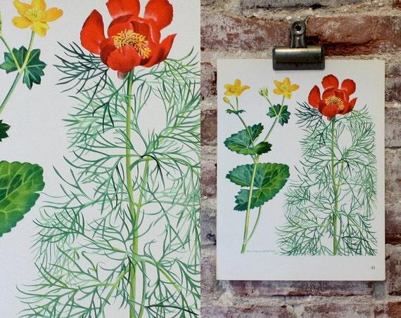 Vintage Flower Plate  - Marigold, Peony - Botanical Illustration 1968