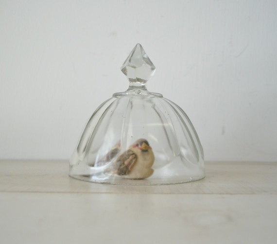 vintage glass dome --cloche---display