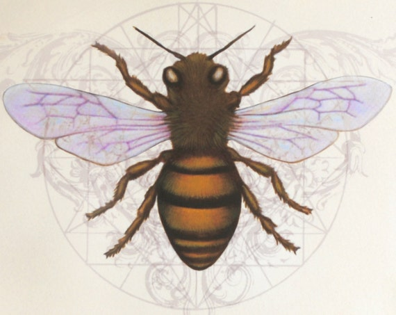 Items similar to honey bee art print home decor for the for Honey bee decorations for your home