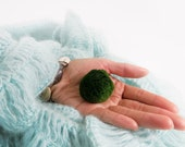 1 Large Marimo For Your Own Aquarium Creation