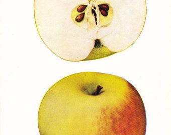 1905 Fruit Print - Hyde King Apple - Vintage Home Kitchen Food Decor Plate Plant Art Illustration Great for Framing 100 Years Old