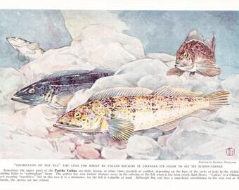 1939 Fish Print - Pacific Cultus - Vintage Antique Nature Science Animal Art Illustration Cabin Cottage Home Decor for Framing