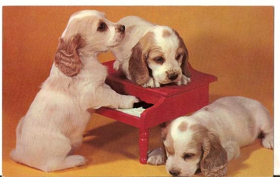 Cocker Spaniel Puppies vintage Color postcard Dog Plays Piano CUTE