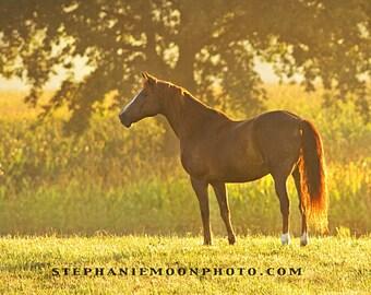 Fine Art Horse Photography, 8x10 Fine Art Horse Color Photograph
