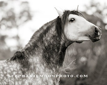 Horse Photography, black and white horse photography, fine art equine photography, 8x10